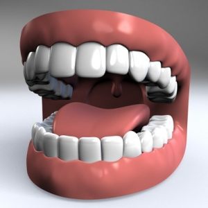 Mouth-model